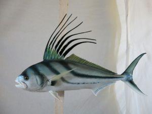 P.R.F.V en especies acuaticas
